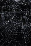 与露水的蜘蛛网 免版税库存图片