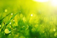 与露水的绿色湿草在刀片。浅DOF 免版税图库摄影