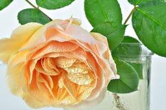 与露滴的黄色罗斯花在花瓶 图库摄影