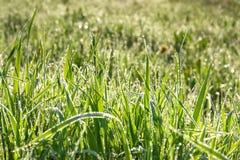与露滴的绿草在夏天草甸迷离背景 库存图片