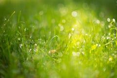 与露水的绿草在阳光下 免版税库存图片