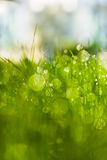 与露水的绿草在阳光下 图库摄影