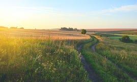 与青山、路、金黄领域和遥远的森林的晴朗的夏天风景 库存照片