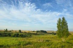 与青山、领域和偏僻的生长桦树的美好的夏天风景 免版税库存图片