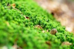 与青苔和其他植物在森林里,非常小景深的绿色路面 库存照片