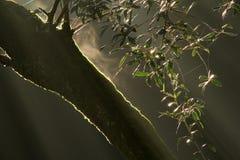 与青苔和叶子的结构树 免版税图库摄影