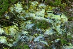与青苔和地衣的岩石在Borghagen 免版税库存图片