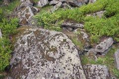 与青苔和地衣的石头 免版税图库摄影