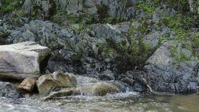 与青苔和急流的岩石 影视素材