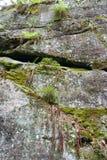 与青苔和植物的石岩石 免版税库存照片