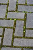 与青苔和植被的铺路石在镇压 免版税图库摄影