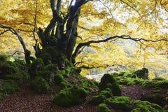 与青苔和秋天的岩石 图库摄影