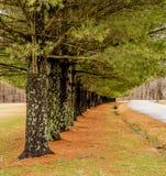 与青苔和绿色分支的五颜六色的树 免版税库存照片