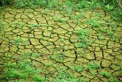 与青苔和草的旱田在运河 免版税库存图片