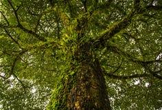 与青苔和蕨的林木 免版税库存图片