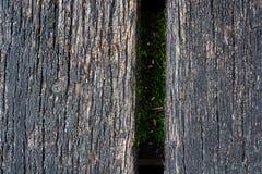与青苔和螺丝刀的木背景 图库摄影