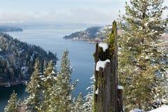 与青苔和雪的树桩 免版税库存图片