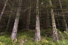 与青苔挪威的树 库存图片