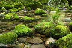 与青苔的岩石 图库摄影