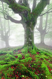 与青苔的扭转的树根在森林 免版税库存照片