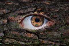 与青苔的木棕色眼睛 库存照片