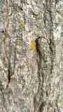 与青苔的树干在春天 免版税库存图片