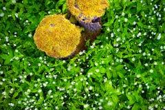 与青苔的树桩在草背景 免版税库存图片