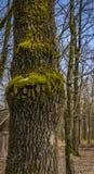 与青苔的树皮 库存图片