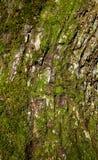 与青苔的树皮 图库摄影