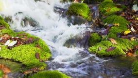 与青苔的森林地小河盖了石头 股票录像