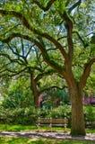 与青苔的橡树在大草原 免版税库存照片