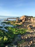 与青苔的海滩在Binh Thuan,越南 免版税图库摄影