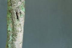 与青苔的结构树 库存照片