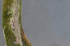 与青苔的结构树 库存图片