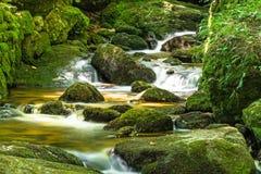 与青苔的美丽的山小河盖了石头 免版税库存图片