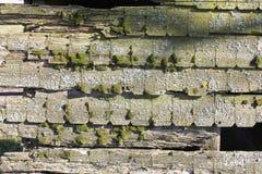 与青苔的老木头 免版税图库摄影