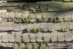 与青苔的老木头 免版税库存照片