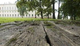与青苔的老板条地板和在公园烘干叶子 免版税库存图片