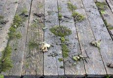 与青苔的老板条地板和在公园烘干叶子 库存照片