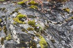 与青苔的黑暗的光滑的石岩石 库存图片