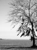 与青苔的黑白树在湖 库存图片