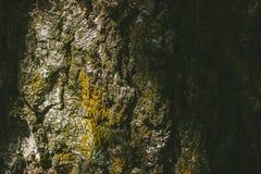 与青苔近景的树皮 库存照片