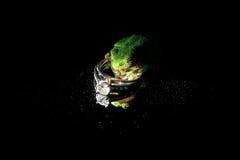 与青蛙的定婚戒指 免版税库存照片