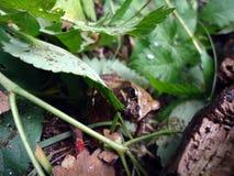 与青蛙的捉迷藏 图库摄影