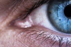 与静脉的眼睛 免版税图库摄影