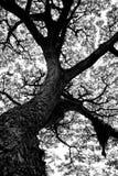 生物演化谱系图解 免版税库存照片