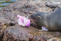 与面具和废气管的海狮 免版税库存照片