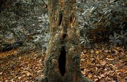 与面孔的鬼的树 免版税库存图片