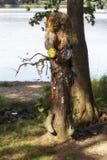 与鞋子的一棵树 免版税图库摄影