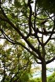 与鞋子的树 免版税图库摄影